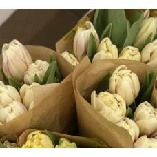 Тюльпан кремовый пионовидный